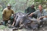 buffel2